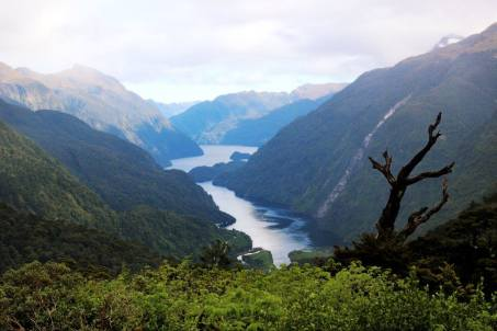 Doubtful Sound from up high