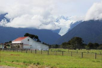 fox-glacier-farm
