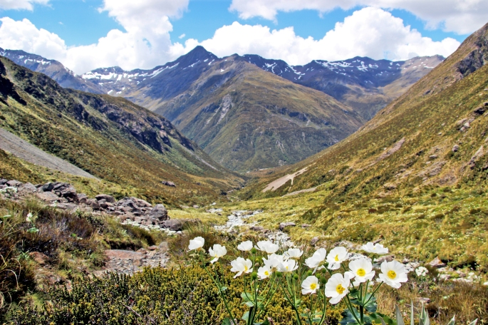 Flowers in the valley - Arthur's Pass
